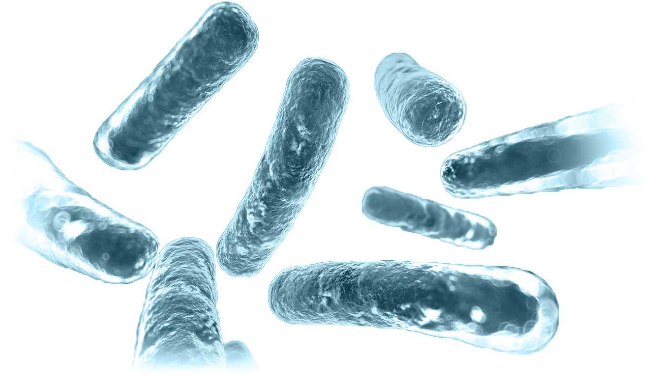 Probiotica - diverse goede bacteriën