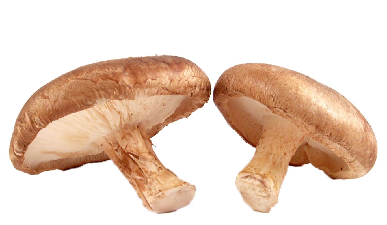 Betaglucaan uit Shiitake paddenstoelen