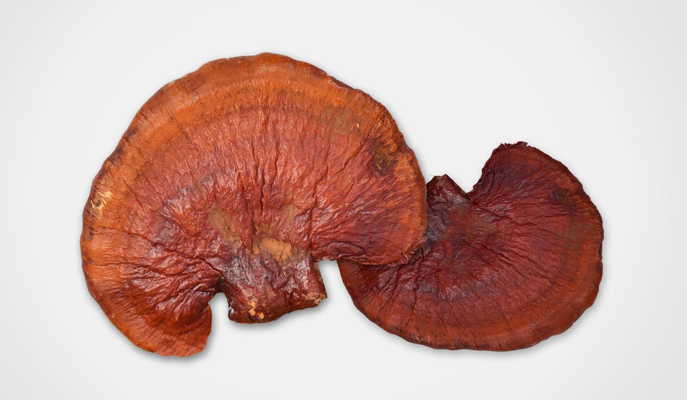 Betaglucaan - Ganoderma lucidum - ingrediënt